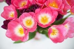 Roze tulpenbloem op witte achtergrond een groetenauto Royalty-vrije Stock Afbeelding