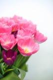 Roze tulpenbloem op witte achtergrond een groetenauto Royalty-vrije Stock Afbeeldingen