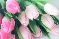Roze tulpenbloemen stock afbeeldingen