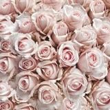 Roze uitstekende rozen