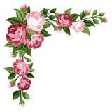Roze uitstekende rozen, rosebuds en bladeren. Stock Afbeeldingen