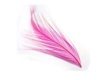 Roze veer Royalty-vrije Stock Fotografie