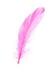 Roze Veer Royalty-vrije Stock Foto's
