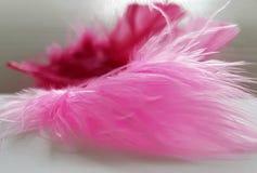 Roze veren in licht Stock Foto