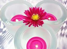 Roze verwarmers en bloem stock foto's