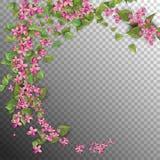 Roze Vliegende Bloemen Stock Foto