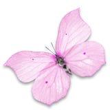 Roze vlinder stock afbeeldingen