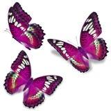 Roze vlinder drie vector illustratie
