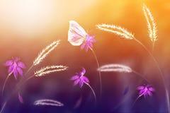Roze vlinder tegen een achtergrond van wilde bloemen in purpere en gele tonen Artistiek beeld Zachte nadruk Royalty-vrije Stock Afbeelding