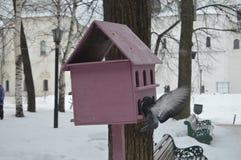 Roze vogelhuis op een boom en het stijgen duif naast het stock foto's