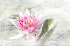 Roze Waterlelie royalty-vrije illustratie