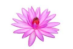 Roze waterlily of lotusbloembloem op wit wordt geïsoleerd dat Royalty-vrije Stock Foto