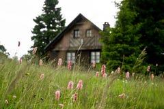 Roze weide en bergplattelandshuisje Royalty-vrije Stock Afbeelding