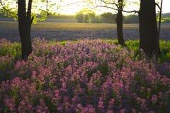 Roze wild bloemen en bos royalty-vrije stock afbeelding