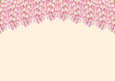 Roze Wisteria die op Beige Achtergrond met exemplaarruimte wordt geïsoleerd Vector illustratie Stock Afbeeldingen