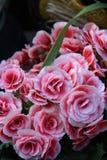roze witte bloem stock foto's
