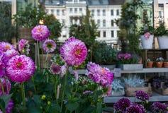 Roze Witte Bloemenbloemist Shop Summer Stock Afbeelding