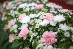 Roze witte orchidee Royalty-vrije Stock Fotografie