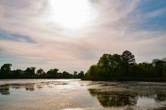 Roze zonsondergang over meer met vegetatie Royalty-vrije Stock Fotografie