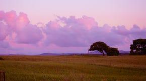 Roze zonsondergang in Sardinige royalty-vrije stock afbeelding