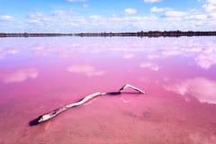 Roze zout meer met stuk van hout in Westelijk Australië royalty-vrije stock fotografie