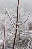 Rozebottel in ijs 07 Stock Afbeeldingen