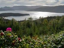Rozebottelbloesems over Bonne-Baai Newfoundland stock afbeelding