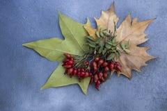 Rozebottels en droge bladeren stock foto