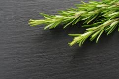 rozemarijn Royalty-vrije Stock Fotografie