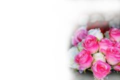 rozen Stock Afbeelding