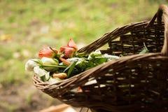 Rozen in een mand in een tuin Royalty-vrije Stock Foto's
