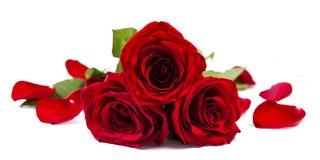 Rozen en bloemblaadje stock foto's