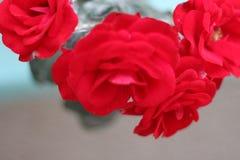 Rozen en het ` s rood Hugh stock afbeelding