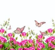 Rozen en vlinder, bloemenachtergrond stock fotografie