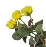 Rozen - geïsoleerd geel Stock Afbeelding
