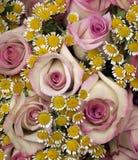Rozen met kleine bloemen Stock Afbeelding