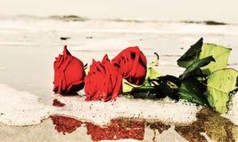Rozen op het strand Stock Afbeelding