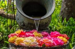 Rozen op het water Royalty-vrije Stock Foto's
