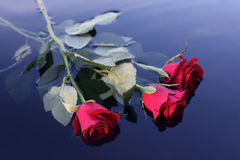 Rozen op het water Royalty-vrije Stock Afbeelding