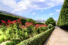 Rozen in Palais Royaltuin in centrum van Parijs, Frankrijk stock foto