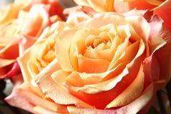 Rozen in Pastelkleur Royalty-vrije Stock Fotografie