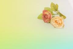 Rozen in zachte kleur Stock Afbeelding