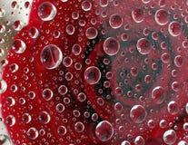Rozenbezinning in duizenden van regendruppel Royalty-vrije Stock Afbeelding