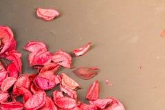 Rozenbloemblaadjes op donkere achtergrond Liefdemalplaatje voor roze de bloemenhoek van de valentijnskaartendag Niets binnen in c Stock Foto's