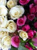 Rozerode witte mooie achtergrond Royalty-vrije Stock Foto