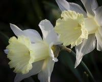 Rozgłaszanie wiosna Zdjęcie Royalty Free