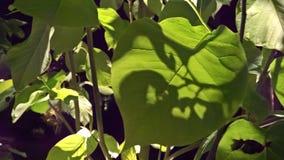 Rozgałęziać się cienie fotografia stock