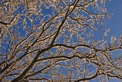 rozgałęzia się śnieżnego Zdjęcia Royalty Free