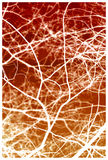 rozgałęzia się czerwonego drzewnego biel Obrazy Royalty Free