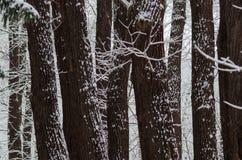 rozgałęzia się drzewa Obraz Royalty Free